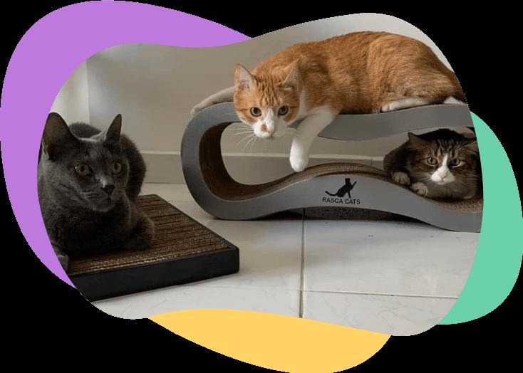 Tres gatos y rascadores